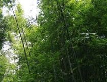 Herbicides pour Bamboo